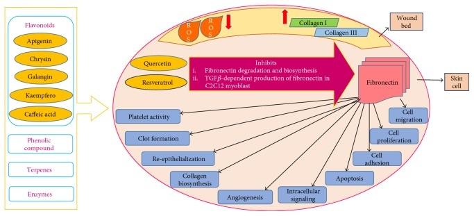 Mecanismo curación heridas propóleo