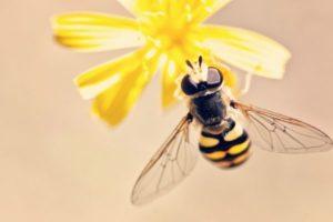 Beneficios de la cera de abeja